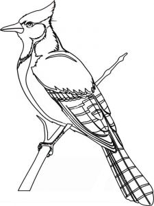 Jay-birds-coloring-pages-8