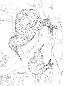 Kiwi-birds-coloring-pages-1