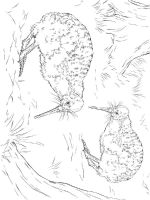 Kiwi-birds-coloring-pages-4