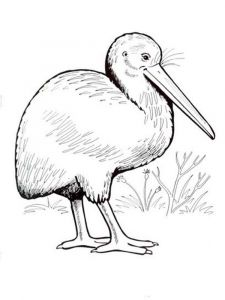 Kiwi-birds-coloring-pages-6