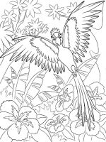 Macaw-birds-coloring-pages-11