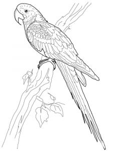 Macaw-birds-coloring-pages-5