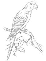 Macaw-birds-coloring-pages-6
