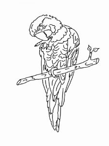Macaw-birds-coloring-pages-8