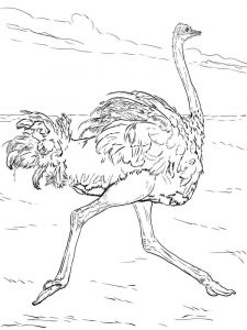 Ostrich-birds-coloring-pages-10