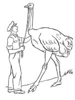 Ostrich-birds-coloring-pages-14
