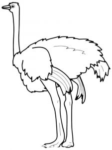 Ostrich-birds-coloring-pages-15