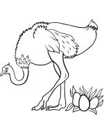 Ostrich-birds-coloring-pages-17