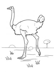 Ostrich-birds-coloring-pages-2