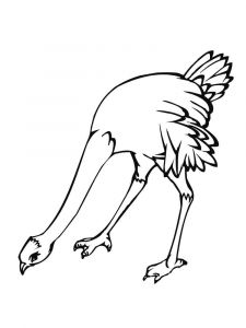 Ostrich-birds-coloring-pages-9