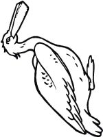 Pelicans-birds-coloring-pages-12
