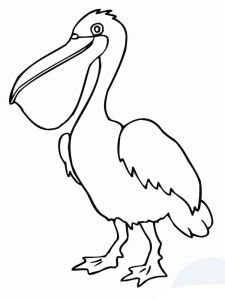 Pelicans-birds-coloring-pages-13