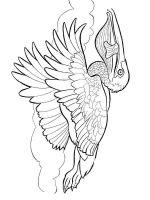 Pelicans-birds-coloring-pages-14