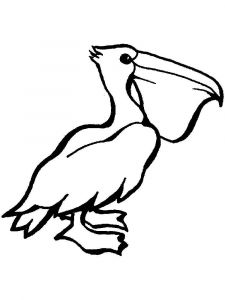 Pelicans-birds-coloring-pages-17