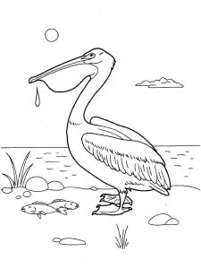 Pelicans-birds-coloring-pages-4