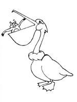 Pelicans-birds-coloring-pages-8