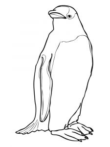 Penguins-birds-coloring-pages-10