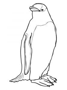 Penguins-birds-coloring-pages-10