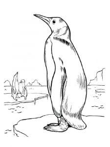 Penguins-birds-coloring-pages-12