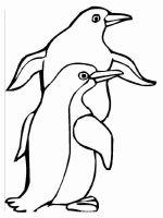 Penguins-birds-coloring-pages-15