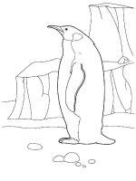 Penguins-birds-coloring-pages-3
