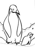 Penguins-birds-coloring-pages-8