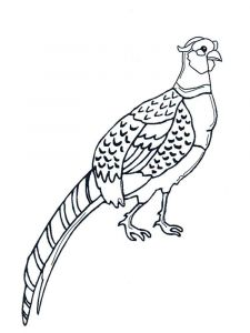 Pheasants-birds-coloring-pages-1