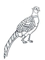 Pheasants-birds-coloring-pages-1