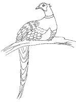 Pheasants-birds-coloring-pages-10