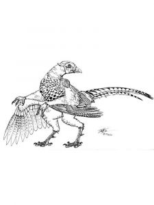 Pheasants-birds-coloring-pages-11