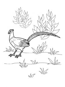 Pheasants-birds-coloring-pages-4