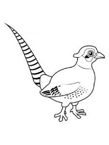 Pheasants-birds-coloring-pages-5