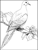 Pigeon-coloring-pages-11