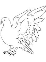 Pigeon-coloring-pages-15