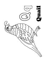 Quail-coloring-pages-1