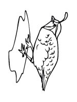 Quail-coloring-pages-2