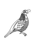 Quail-coloring-pages-3
