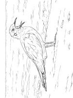 Seagulls-birds-coloring-pages-1