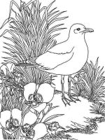 Seagulls-birds-coloring-pages-11