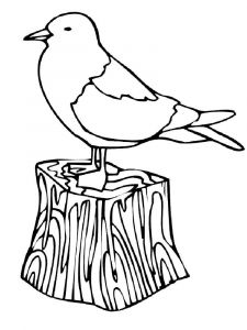 Seagulls-birds-coloring-pages-12