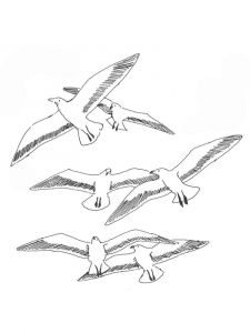 Seagulls-birds-coloring-pages-13