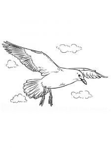 Seagulls-birds-coloring-pages-15