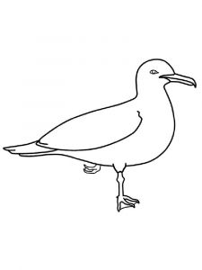 Seagulls-birds-coloring-pages-16