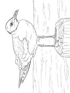 Seagulls-birds-coloring-pages-6