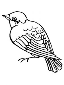 Sparrows-birds-coloring-pages-15