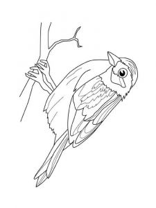 Sparrows-birds-coloring-pages-2
