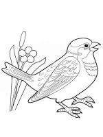 Sparrows-birds-coloring-pages-7