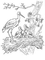 Stork-birds-coloring-pages-1