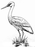Stork-birds-coloring-pages-4