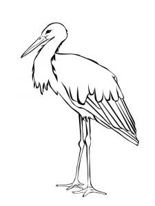 Stork-birds-coloring-pages-6